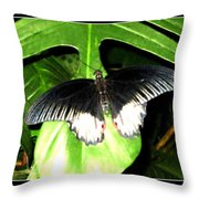 Butterfly Ready For Take Off Throw Pillow