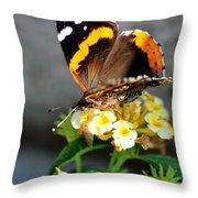 Butterfly Sipping Lantana Luscious Lemonade   Throw Pillow