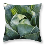 Cabbage In The Vegetable Garden Throw Pillow