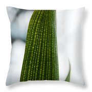 Cactus 28 Throw Pillow