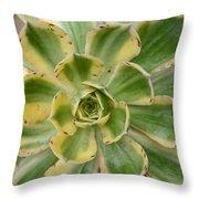 Cactus 63 Throw Pillow