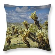 Cactus Also Called Teddy Bear Cholla Throw Pillow