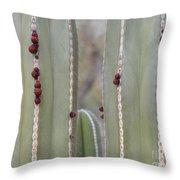 Cactus Buds Throw Pillow