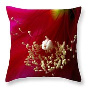 Cactus Flower Interior Throw Pillow