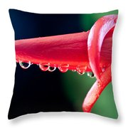 Cactus Orchid Bud Throw Pillow
