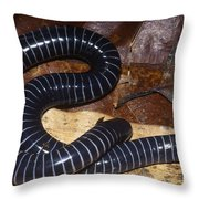 Caecilian Throw Pillow