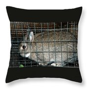 Caged Rabbit Throw Pillow