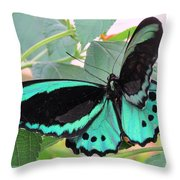 Butterfly Of Many Colors Throw Pillow