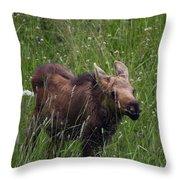 Calf Feeding Throw Pillow