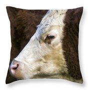 Calf Portrait Throw Pillow