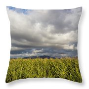 California Cornfield Throw Pillow