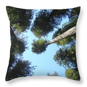 California Redwood Trees Fine Art Prints Forest Throw Pillow