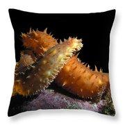 California Sea Cucumber Love Throw Pillow