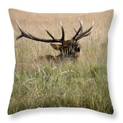 Call Of The Wild 1 Throw Pillow