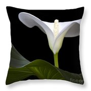 Calla Beauty Throw Pillow