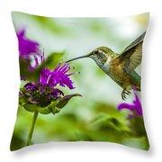 Calliope Hummingbird At Bee Balm Throw Pillow