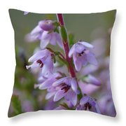 Calluna Vulgaris 4  Throw Pillow