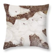 Camarasaurus Vertebrae Covered Throw Pillow
