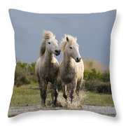 Camargue Horse Equus Caballus Pair Throw Pillow