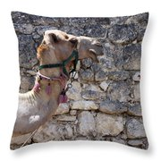 Camel At Sebastia Throw Pillow