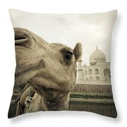Camel In Front Of The Yamuna River And Throw Pillow