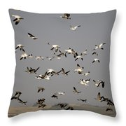 Canada Geese And White Geese Migration Throw Pillow