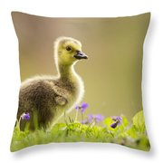 Canada Goose Baby Throw Pillow