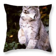 Canada Lynx With Paw Up   Throw Pillow