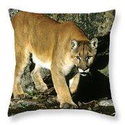 Canadian Cougar Throw Pillow
