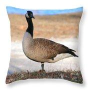 Canadian Goose 2 Throw Pillow