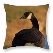 Canadian Goose Closeup By A Pond Throw Pillow