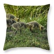Canadian Goose Gosslings Throw Pillow