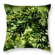 Canadian Hemlock Tips Throw Pillow