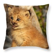 Canadian Lynx Kitten, Alaska Throw Pillow