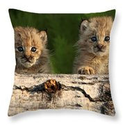 Canadian Lynx Kittens Looking Throw Pillow