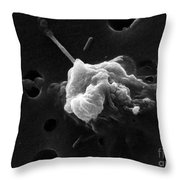 Cancer Cell Death 6 Of 6 Throw Pillow by Science Source