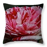 Candy Cane Rose Throw Pillow