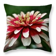 Candy Color Zinnia Throw Pillow