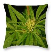 Cannabis Bud Throw Pillow