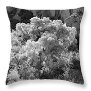 Canyon Treasure Throw Pillow
