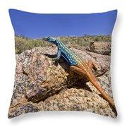 Cape Flat Lizard  South Africa Throw Pillow by Piotr Naskrecki