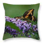 Captivating Swallowtail On Butterfly Bush Flower Throw Pillow