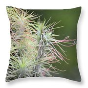 Caput Medusa Throw Pillow