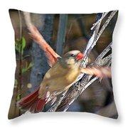 Cardinal 4 Throw Pillow