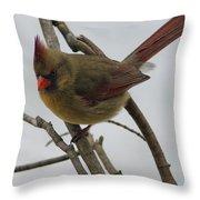 Cardinal Cold Winter Stare Throw Pillow
