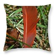 Cardinal Feather Throw Pillow