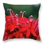 Cardinal Flower Close Up Throw Pillow