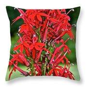 Cardinal Flower Full Bloom Throw Pillow