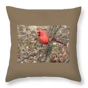 Cardinal In A Bush Throw Pillow