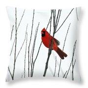 Cardinal In Willow  Throw Pillow